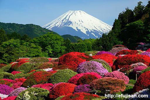 箱根庭園のつつじと富士山
